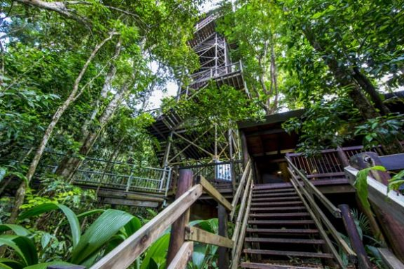 Daintree-Discover Centre