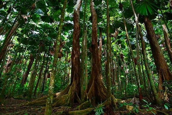 Daintree-Guided-Walk-tours