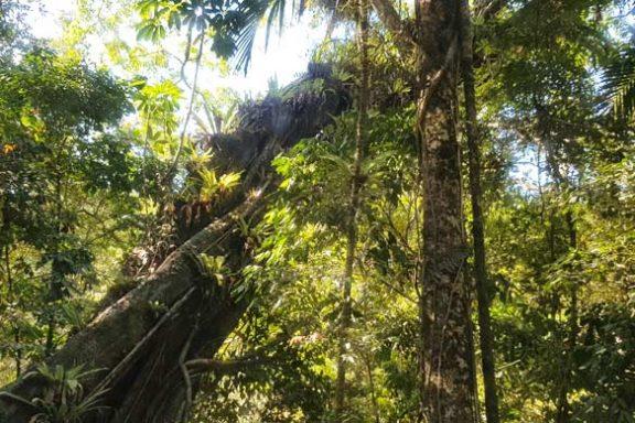 explore-daintree-rainforest